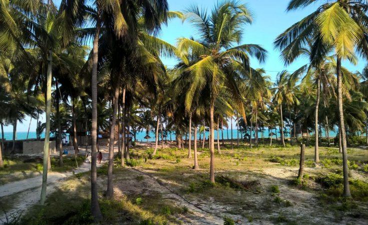 Winter escape tanzania Zanzibar