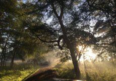 Kenia verhuisbericht Charlie's Travels